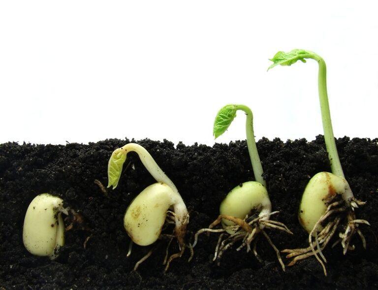 Как проверить, прорастут ли семена