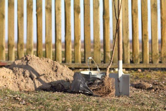 Как сделать яму для рассады: пошаговая инструкция