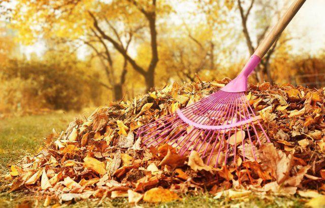 осенью необходимо убирать растительные остатки с огорода и огорода